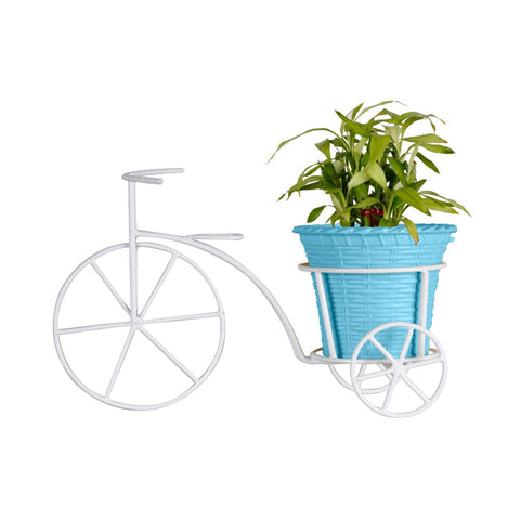 ALL INDOOR PLANTS ONLINE - Lucky Bamboo Plant and Plastic Planter with Bicycle