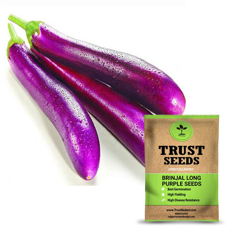 Seeds - Brinjal long purple seeds (OP)