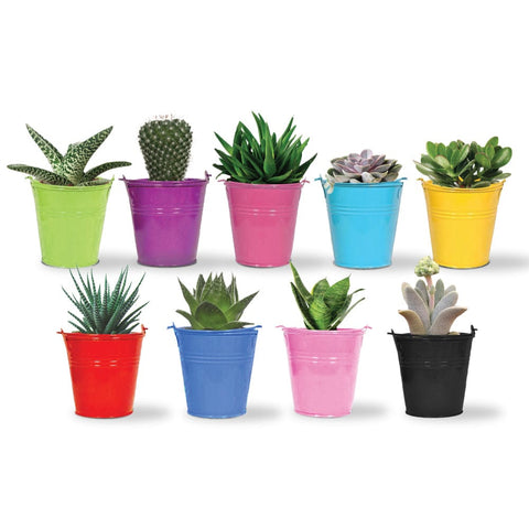 Indoor TableTop Planters - Set of 5 Tiny Bucket Planters - Assorted Colors