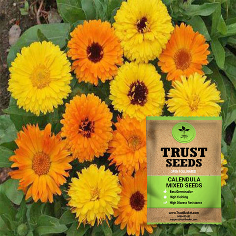 Under Rs.299 - Calendula mixed seeds(Open Pollinated)