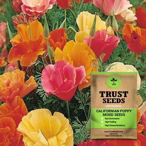 All online products - Californian poppy mixed seeds (OP)