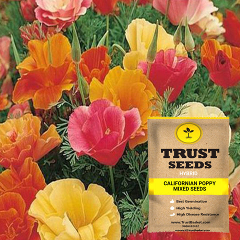 Under Rs.299 - Californian poppy mixed seeds (Hybrid)