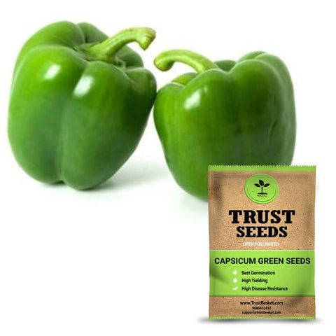 Under Rs.299 - Capsicum green seeds(Open Pollinated)