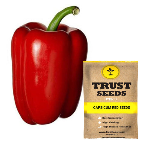 Capsicum red Seeds (Hybrid)