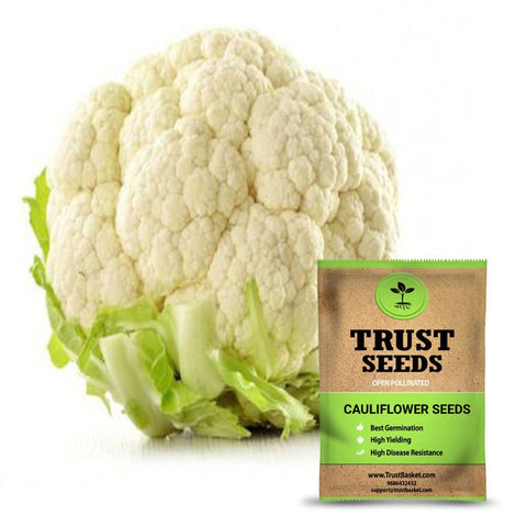 Buy Best Cauliflower Plant Seeds Online - Cauliflower seeds (Open Pollinated)