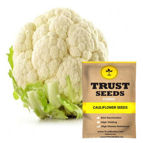 Buy Best Cauliflower Plant Seeds Online - Cauliflower seeds (Hybrid)