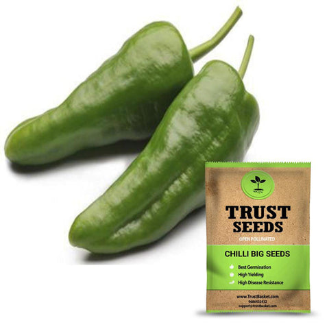 Buy Best Chilli Plant Seeds Online - Chilli big seeds (Open Pollinated)