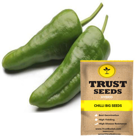 Buy Best Chilli Plant Seeds Online - Chilli big seeds (Hybrid)
