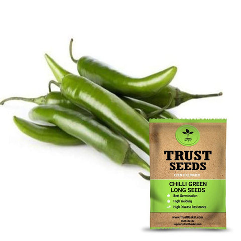Buy Best Chilli Plant Seeds Online - Chilli green long seeds (Open Pollinated)