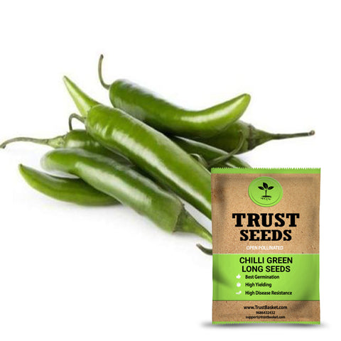 Seeds - Chilli green long seeds (Open Pollinated)