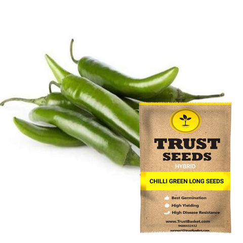Buy Best Chilli Plant Seeds Online - Chilli green long seeds (Hybrid)