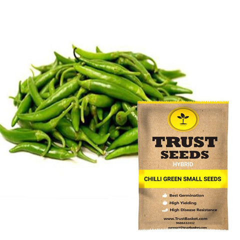 Buy Best Chilli Plant Seeds Online - Chilli green small seeds (Hybrid)