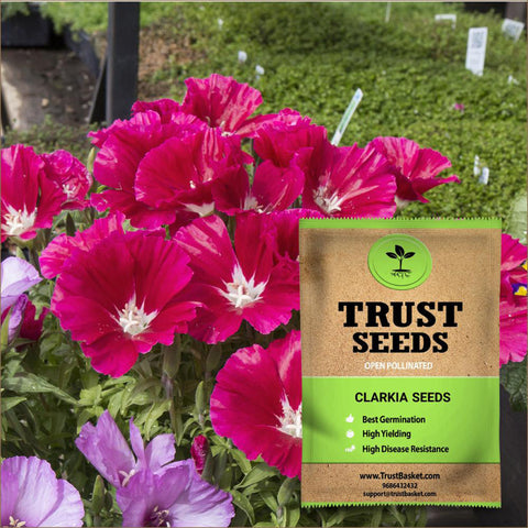 All Flower seeds - Clarkia Seeds (OP)