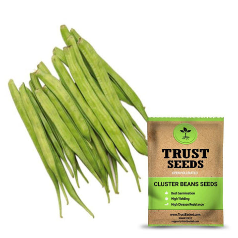 All seeds - Cluster beans seeds (Open Pollinated)