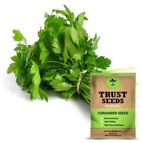 All Greens and Fruits Seeds - Coriander seeds (Open Pollinated)