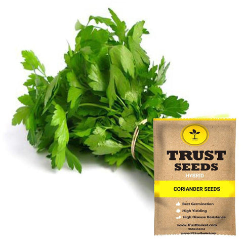 All Greens and Fruits Seeds - Coriander Seeds (Hybrid)