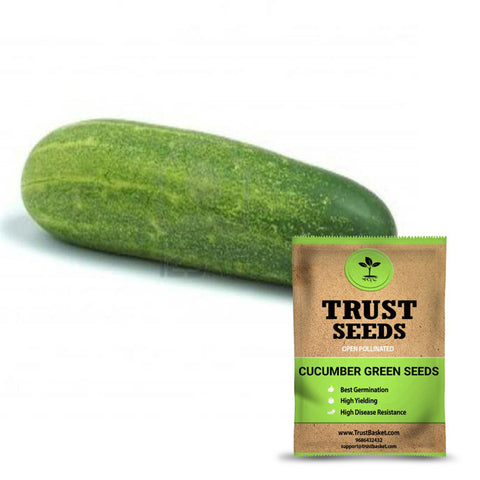 Under Rs.299 - Cucumber green seeds (Open Pollinated)