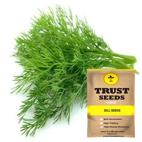 Buy Best Dill Plant Seeds Online - Dill Seeds (Hybrid)