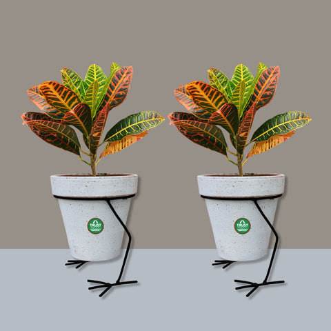 Planter Stand for Flower Pots - Hen Planter Stand - Set of 2