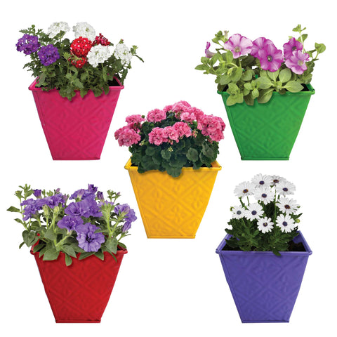 Indoor TableTop Planters - TrustBasket Small Table Top Planters/Pots (Red,Yellow, Green, Purple, Magenta) - Set of 5