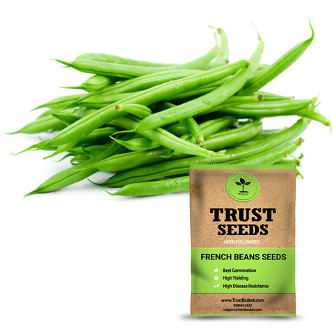 Under Rs.299 - French beans seeds (Open Pollinated)