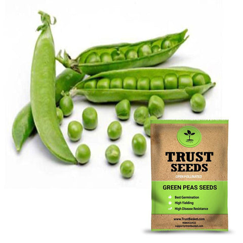 Seeds - Green Peas  seeds (Open Pollinated)