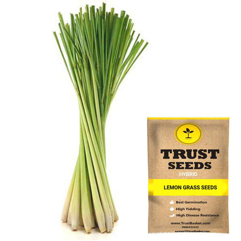 All Greens and Fruits Seeds - Lemon Grass seeds (Hybrid)