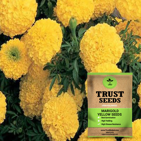 Buy Best Marigold Plant Seeds Online - Marigold yellow seeds (Open Pollinated)
