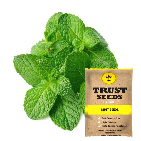 All Greens and Fruits Seeds - Mint Seeds (Hybrid)