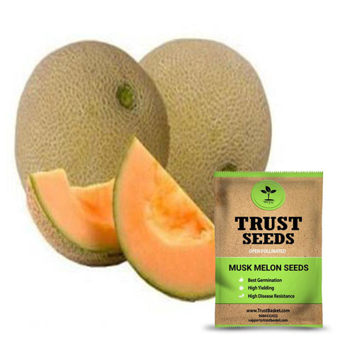 All Greens and Fruits Seeds - Musk melon seeds (Open Pollinated)