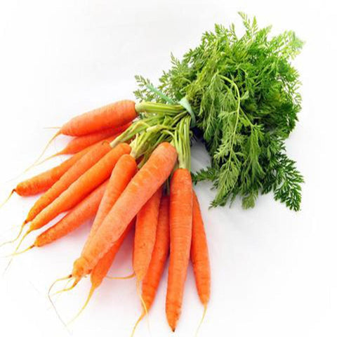 Carrot normal seeds (Hybrid)