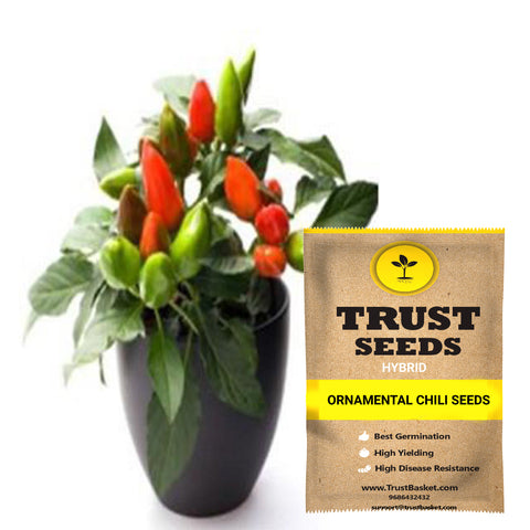 Buy Best Chilli Plant Seeds Online - Ornamental chili seeds (Hybrid)