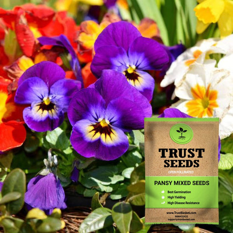 Open Pollinated Flower seeds - Pansy mixed seeds (Open Pollinated)
