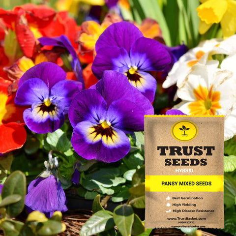 All Flower seeds - Pansy mixed seeds (Hybrid)