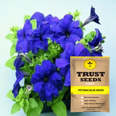 Buy Best Petunia Plant Seeds Online - Petunia blue seeds (Hybrid)