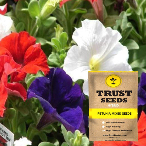 Buy Best Petunia Plant Seeds Online - Petunia mixed seeds (Hybrid)