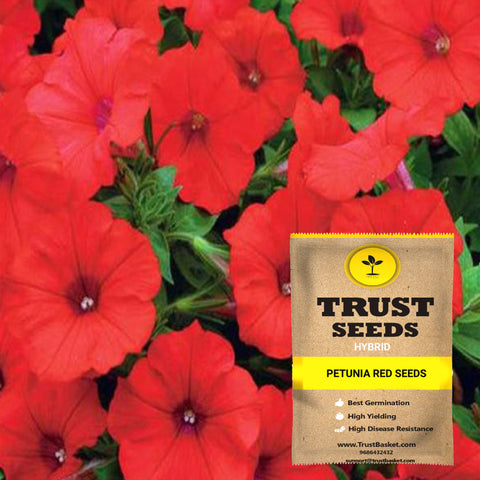 Buy Best Petunia Plant Seeds Online - Petunia red seeds (Hybrid)