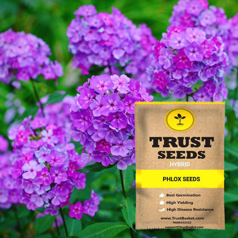 All Flower seeds - Phlox Seeds (Hybrid)