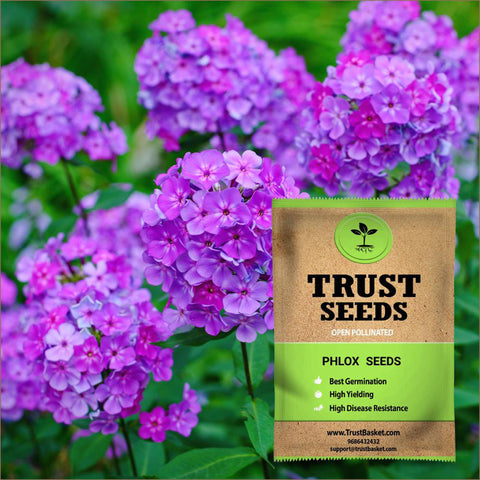 All Flower seeds - Phlox Seeds (OP)