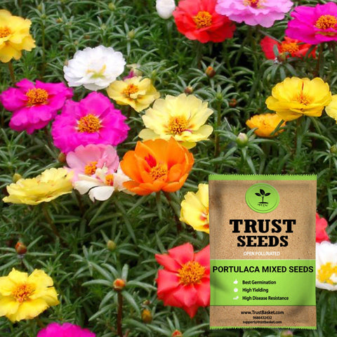 All seeds - Portulaca mixed seeds (OP)