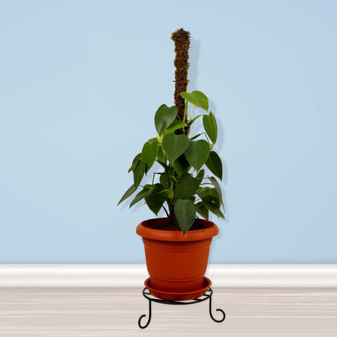 Buy Best Plant Stands Online - Premium Pot Stand for Plants