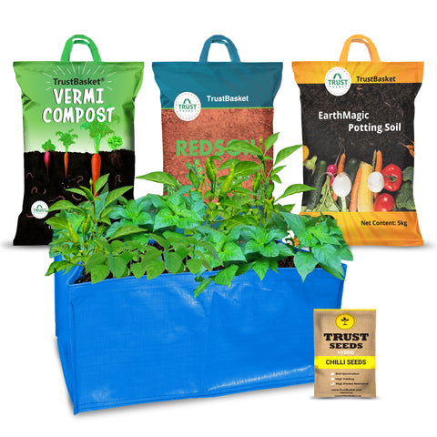 Best Vegetable & Gardening Kit in India - TrustBasket EasyGro Chilli Growing Kit (Grow bag, Soil, manure, Seeds)