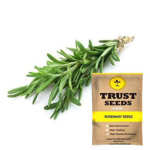 Buy Best Rosemery Plant Seeds Online - Rosemary seeds (Hybrid)