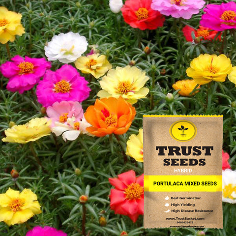 Under Rs.299 - Portulaca mixed seeds (Hybrid)