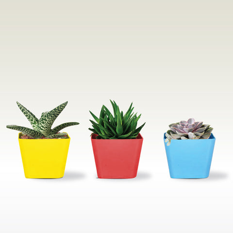 4 inch Square Succulent Planter(Red, Yellow and Teal )- Set of 3