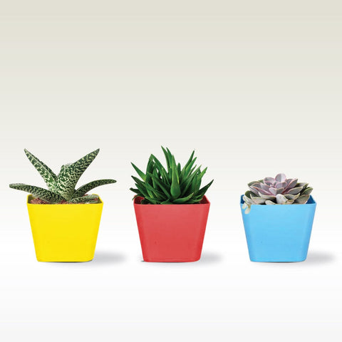 Indoor TableTop Planters - 3.5 inch Square Succulent Planter(Red, Yellow and Teal )- Set of 3