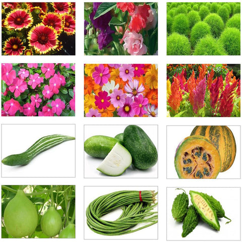 All Flower seeds - Summer Vegetable and Flower Seeds Kit (Set of 12 Packets)