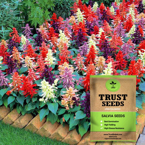 Colorful Designer made planters - Salvia seeds (op)