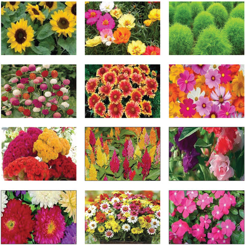 Summer Flower Seeds Kit (Set of 12 Packets)