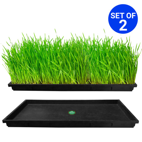 Buy Medium Pots Online - TrustBasket Wheat Grass Trays